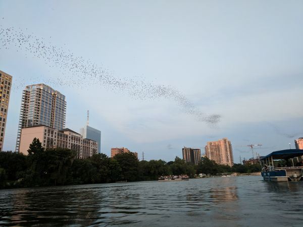 Date Night: Bat Watching from Kayaks